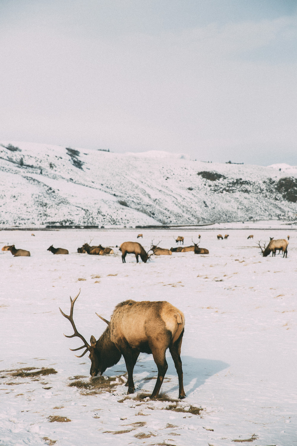 Dash of Darling | Jackson Hole Wyoming Winter